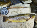 Big brown trout photo of inch caught from a stream in northern rural maryland the is a nice fish fishing is a Stock Photo