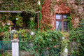 Big building covered with overgrown plants window and garden cov climbing a nice green small fence that Stock Images
