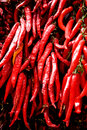 Big bunch of red hot chilli pepper Royalty Free Stock Image
