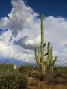 Big Cactus Stock Photos