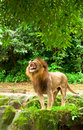 The Big Cat Kingdom Royalty Free Stock Photo