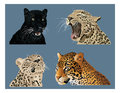 Big cats it is illustration of several spotted Stock Image