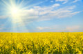 Big cloud on blue sky over yellow rape field (Backgrounds. blur