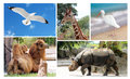 stock image of  Big collage wild life animals