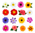 Big collection of colorful flowers vector illustration Royalty Free Stock Photos