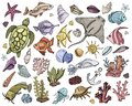 stock image of  Vector seashells Set