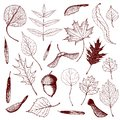 Big collection of engraved forest leaves and seeds. Hand drawn outline illustration of different types of leaves like birch,