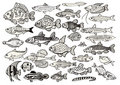 A big collection of  fish Stock Photo