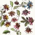 Big collection of retro style flowers. Botanical illustration de