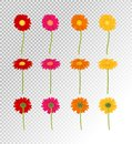 Big Colorful Gerbers Flowers Set, Vector Illustration Royalty Free Stock Photo