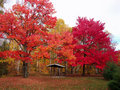 Big colourful trees Royalty Free Stock Image