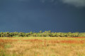 Big Cypress Storm Royalty Free Stock Photo