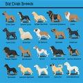 Big Dog Breeds Dog cute Cartoon Design Vector puppy dog Cartoons Design