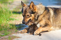Big dog and little kitten hugging outdoor Royalty Free Stock Image