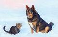 Big dog and little kitten sitting in the snow Royalty Free Stock Photo