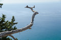 Big dry branch sea view Royalty Free Stock Photo