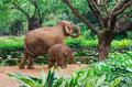 Big elephant mother and small baby family in tropical Royalty Free Stock Photos