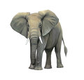 Big elephant standing illustration white background Stock Photography