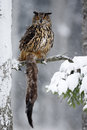 Big Eurasian Eagle Owl sitting on snowy tree trunk with snow, snowflake and kill brown Marten during winter Royalty Free Stock Photo