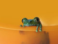 Big eyed tree frog leptopelis vermiculatus short depth field focus right eye orange background Stock Images