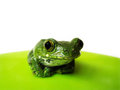 Big eyed tree frog leptopelis vermiculatus a sitting Royalty Free Stock Images