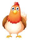 A big fat hen illustration of on white background Stock Photos