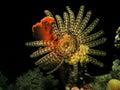 Big feather star fish Stock Photo