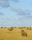 Big field with round sheaves of yellow straw after a crop harvest Royalty Free Stock Photo