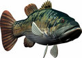 Big fish Stock Images