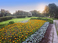 Big flower bed with marigold flowers (Tagetes) in park on a sunset Royalty Free Stock Photo