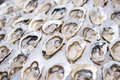 Big fresh oyster in the white plate fot dinner Royalty Free Stock Photo