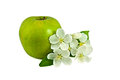 Big green apple with small bunch of apple tree flowers one fresh isolated on white background Royalty Free Stock Photos