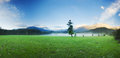 Big green lonely tree on the field at foggy with forest and mountains background Royalty Free Stock Images