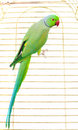 Big green parrot Stock Images