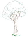 Big green tree with a dense crown vector drawn by hand Stock Image