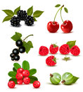 Big group of fresh berries and cherries vector illustration Royalty Free Stock Photography