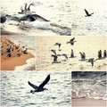Big group op seagulls take of from the beach at sunset, alone seagull fly away, set of images of wild nature Royalty Free Stock Photo