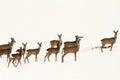 Big herd of roe deers Royalty Free Stock Photo