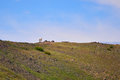 Big horn sheep Royalty Free Stock Photo