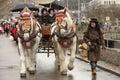 Big horses at Carnival parade, Stuttgart Royalty Free Stock Photo