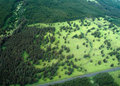 Big Island aerial shot - rain forest Stock Image