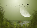 Big moon with birds in the lake Stock Photos