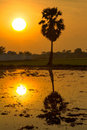 Big morning sun with palm trees in the field water reflections. Royalty Free Stock Photo