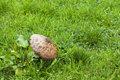 Big mushroom among the green grass Stock Image