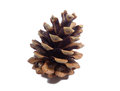 Big natural dry pine cone isolated on white background Royalty Free Stock Photo