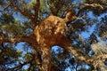 Big nest. Namibia Royalty Free Stock Photo