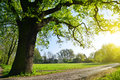 Big oak tree in the park. Royalty Free Stock Photo