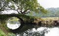 Big old camphor tree over a small birdge Royalty Free Stock Photo