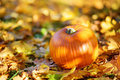 Big orange pumpkin laying on the ground covered with autumn leaves Royalty Free Stock Photo