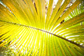 Big palm leaf high resolution photo of Stock Image
